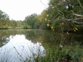 Terrain avec étang.  2.7Ha Terrain, Etang de 600m².