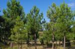 Domaine forestier de 80 hectares!