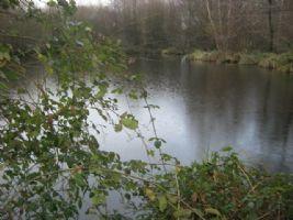 Etang de pêche en Mayenne d'environ 2 500 m² sur un terrain d'un peu moins de 1,5 hectare