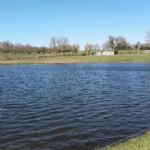 Joli étang